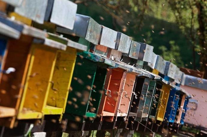 incontro con le api