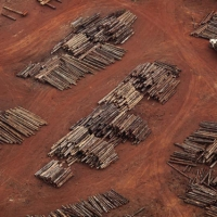 Piles of wood that feed charcoal ovens in Par state.