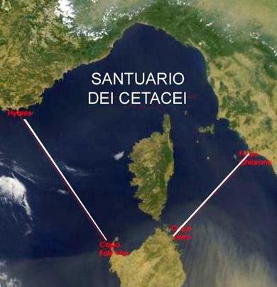 Santuario Cetacei Dei Ambientambienti