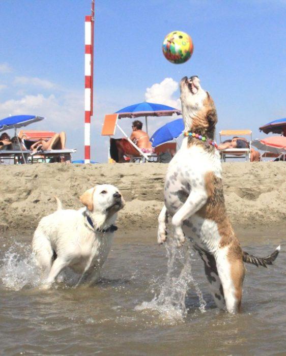 cani-giochi-spiaggia