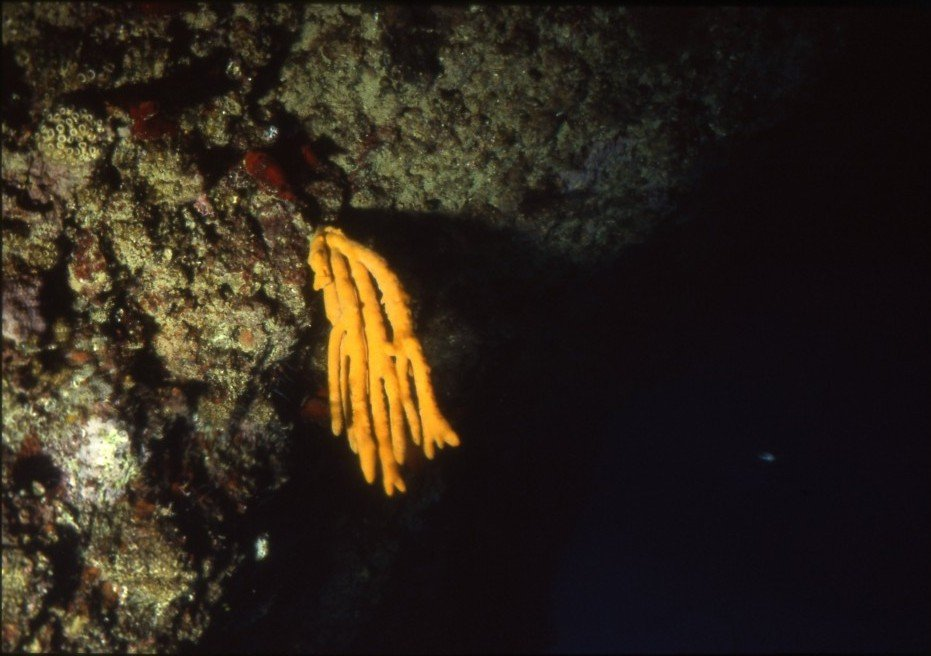 coralligeno-cala-incina