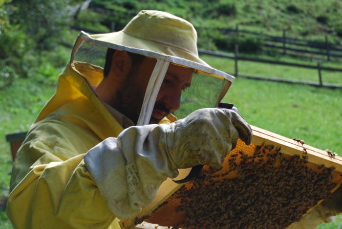 sergio angeli apicoltore