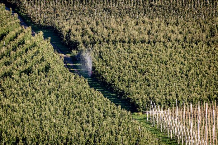 coltivazione mele in alto adige (Jörg Farys)