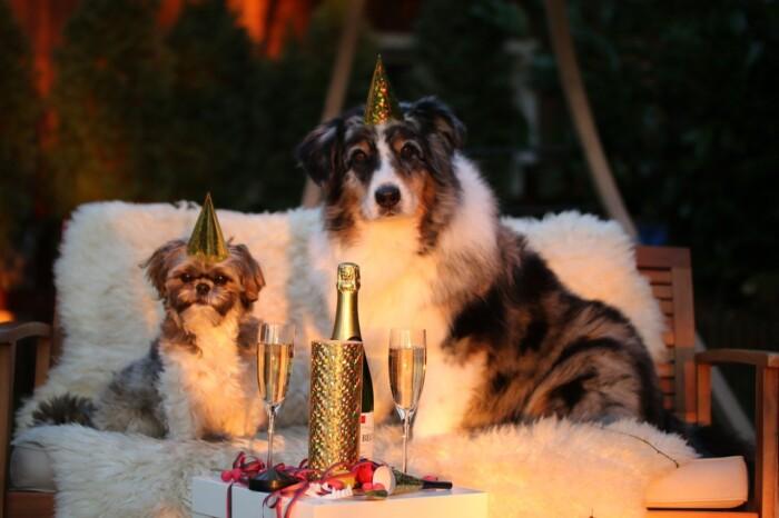 Cani capodanno_da pixabay, libera da diritti