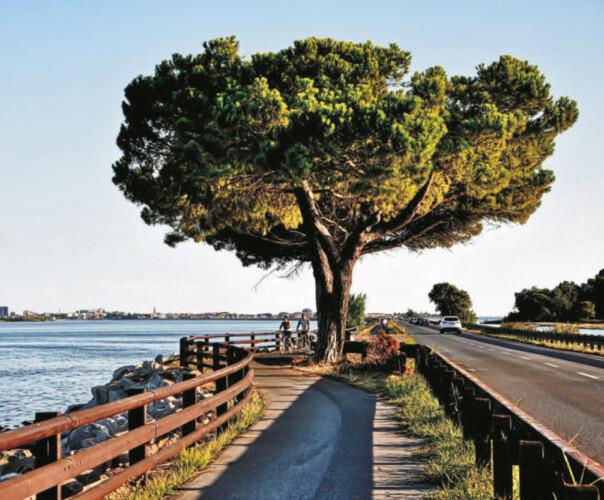 albero natura master unipg