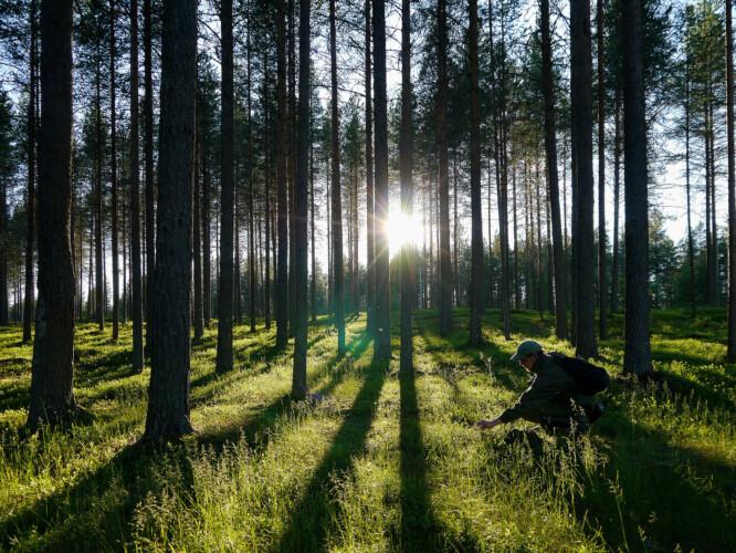 foresta a Kuusamo (Finlandia)_credit Tarja Hoikkala