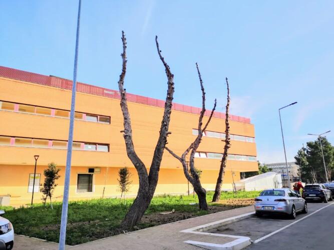 foggia policlinico ospedale