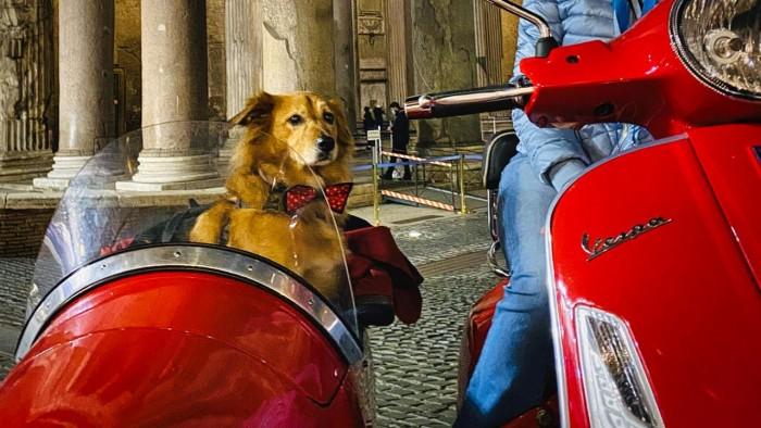 TripForDog_vespa_Roma_cane